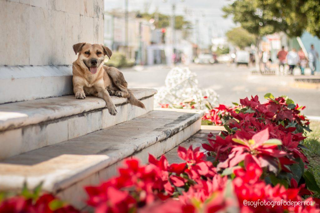 perro acostado en el remate de paseo de montejo rematito mérida yucatan
